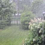 Sommar-regn